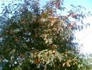Мандарины не покупают - они прсото растут на деревъях