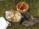 Мало грибов, много удовольствия