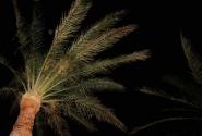 пальма ... жалко не видно на фоте, какие там были звезды....эх