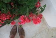 люблю цветочки