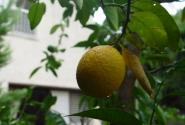 Просто лимон)))