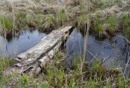 Из болота в болото