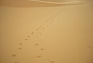 Сахара. Там, где ступала нога человека