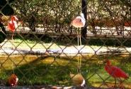 фламинго...красота и грация