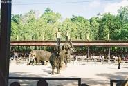 Шоу слонов: и танцуют...