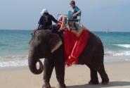 По пляжу слона водили...!