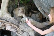 Здесь все такие ласковые! (На Бали они какие-то дикие, атакуют при виде бананов так, что мало не покажется!)