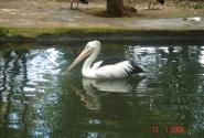 Парк птиц и рептилий