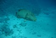 Если встретится Наполеон - Вам очень повезло! Очень большая и красивая рыба!