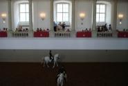Это мы  на представлении испанской королевской школы верховой езды