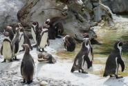 … И пингвины