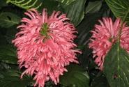 Много ярких и красивых цветов