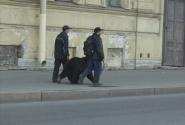 Снега нет, но медведи по улицам ходят