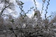 Цветут цветы на Маргите (апрель)