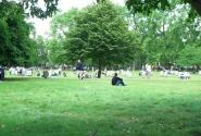 Лужайки Грин Парка
