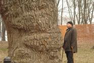 У многовековых дубов и подзарядиться можно!
