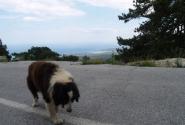 Вид с горы Олимп