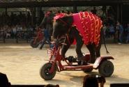 Даже слона...
