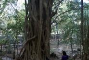 Колыбель в лесу