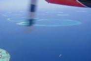 вид жемчужинок в Индийском океане