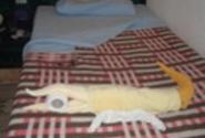 такие вот живности и з полотенец каждый день встречали нас в номере