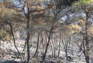 виртуальность - лес сгорел...