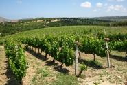 На Крите сть все - даже музей винограда на заводе Boutari