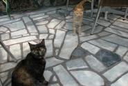 Немного о кошках