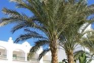 Непахнущая пальма