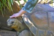 большие черепахи