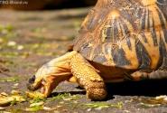 Вот так большие черепахи жрут :-)