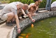 кормление рыбок стало в эту поездку традиционной забавой при каждом возможном случае...