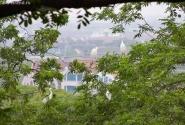 множество парков притягивает к себе аистов...