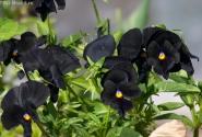 весна ... в черном...
