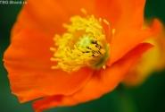 весна... в оранжевом...