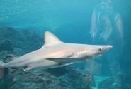 Настоящая акула! За стеклом