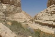 В пустыне Негев