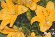 Жёлтый цвет - источник жизни