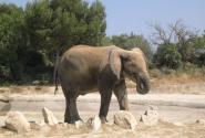 Слоны, чудо как хороши!