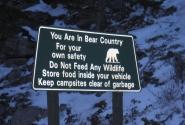 осторожно! голодные медведи!