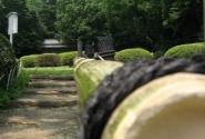 умиротворенный парк