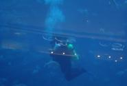 дайвинг с акулами и скатами