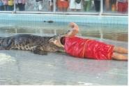 Шоу с крокодилами