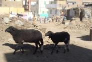 в деревнях Асуана