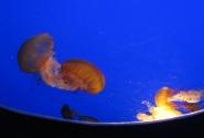 Мы медузы..мы медузы..