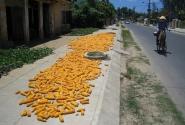 Тротуар - сушилка для кукурузы