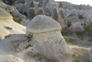 Гриб...каменный