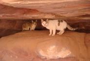 Пещерные кошки