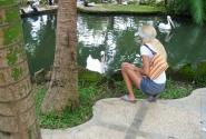 в парке птиц с лебедем