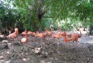 Первый раз увидел розового фламинго, прикольно!